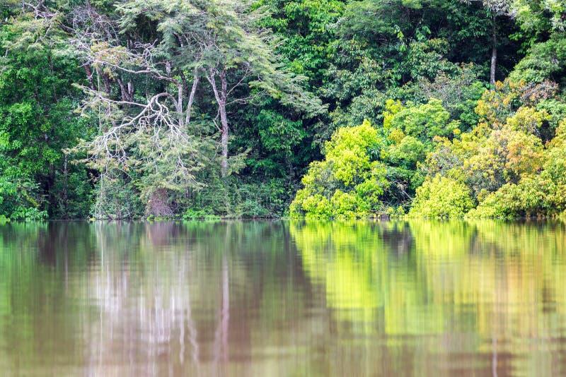 绿色密林反射 库存图片