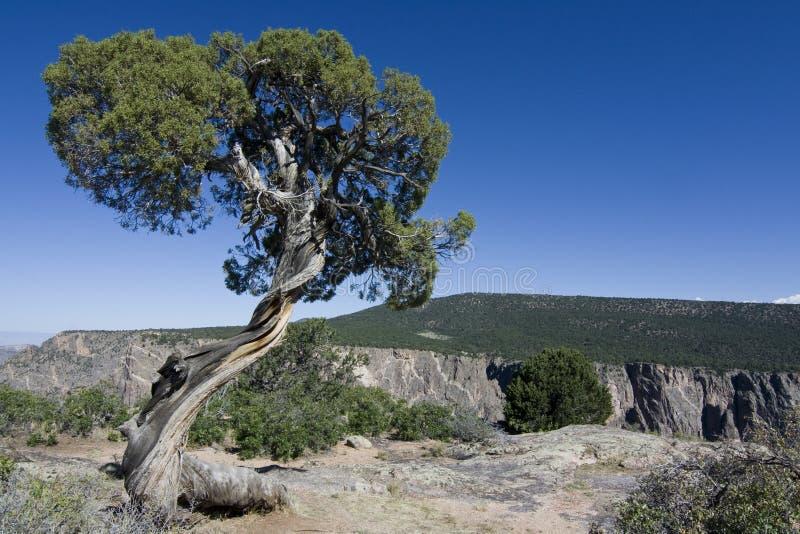 黑色峡谷gunnison国家公园 库存图片