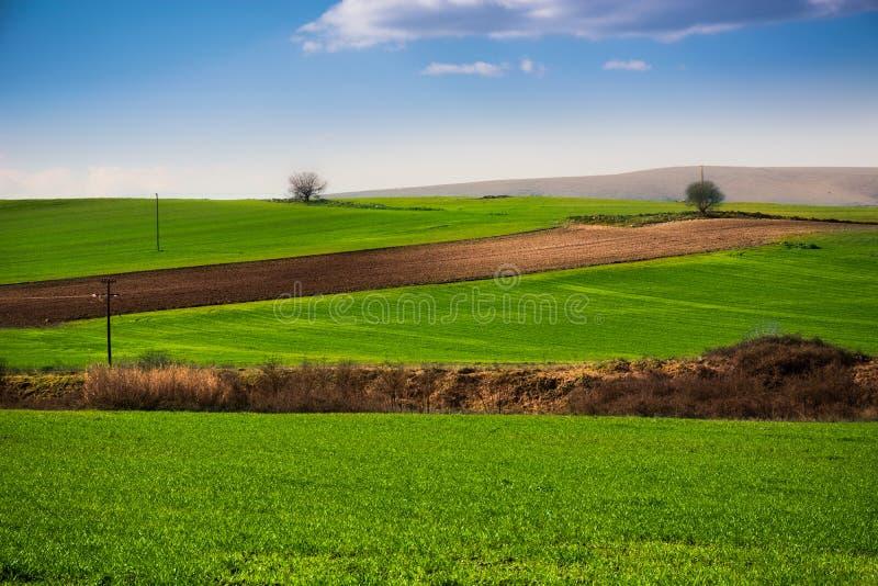 绿色平原 免版税库存图片