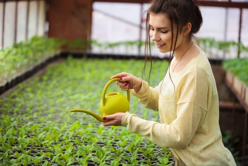 给绿色幼木喝水的年轻农夫妇女自温室 免版税图库摄影