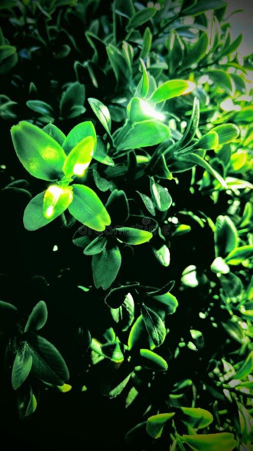 绿色庭院开花疯狂的光 免版税图库摄影