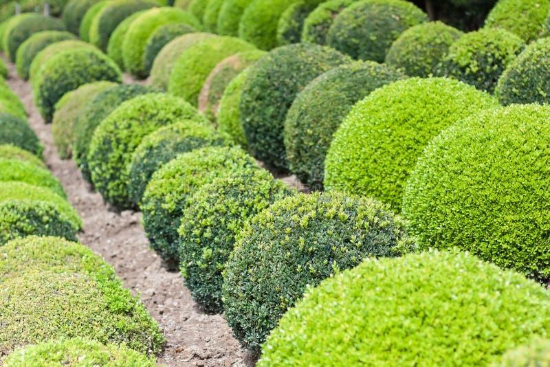 绿色庭院球在法国 免版税图库摄影