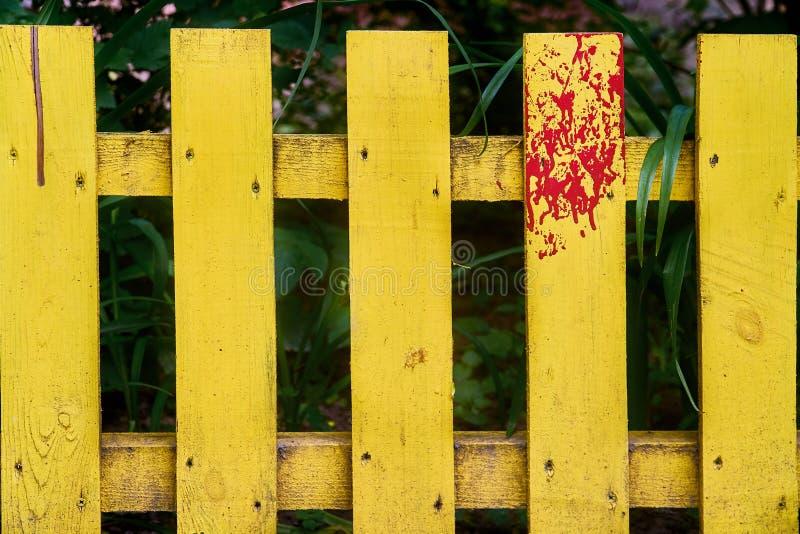 黄色庭院篱芭 免版税库存照片