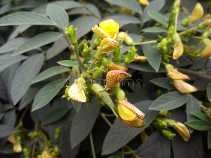 黄色开花充分的hd pic台式计算机 免版税库存图片