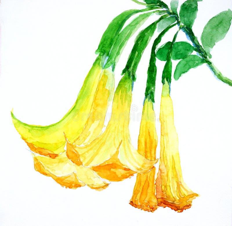 黄色开花被绘的水彩 向量例证