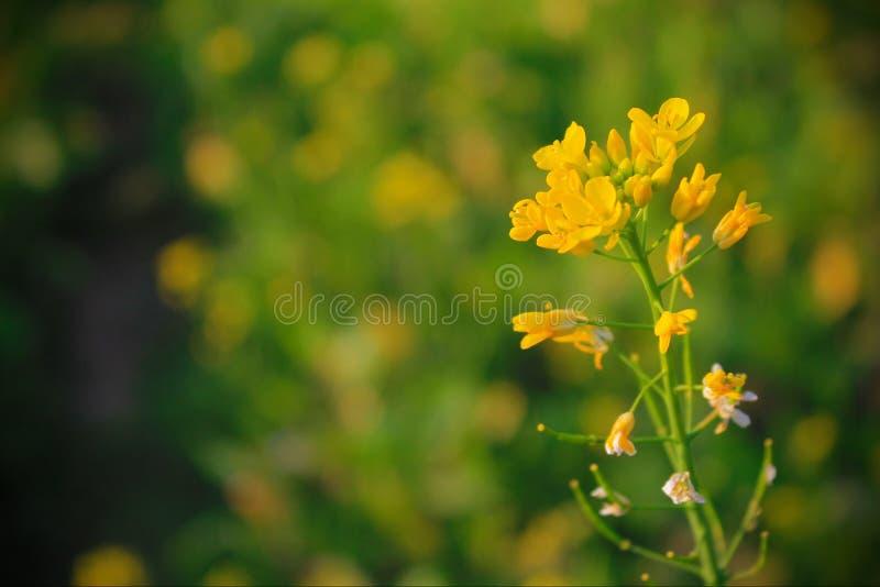 黄色开花 图库摄影