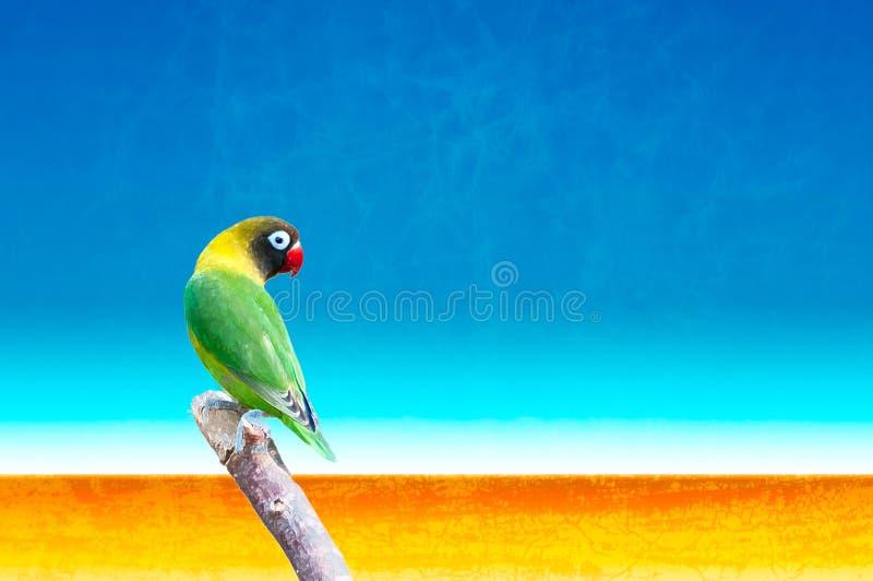 黄色抓住衣领口的爱情鸟(Agapornis personatus) 免版税图库摄影
