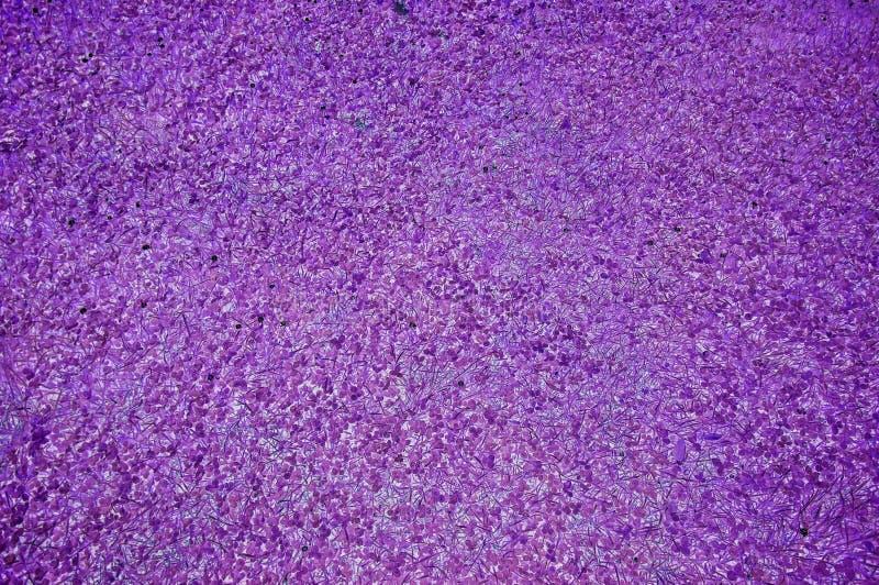紫色摘要整理了草地背景夏天自然绿色草坪 图库摄影