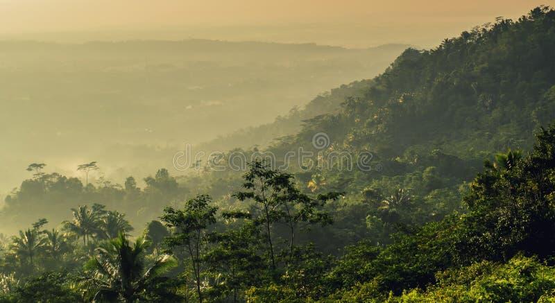 黄色日出在森林和树里 库存照片
