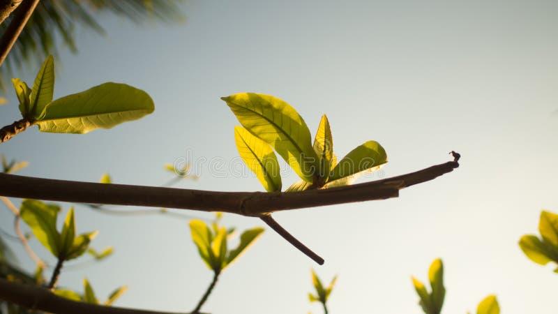 绿色早晨离开与阳光天 免版税库存照片