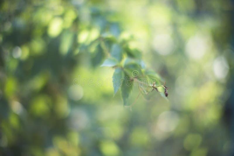 绿色春天分行 库存图片