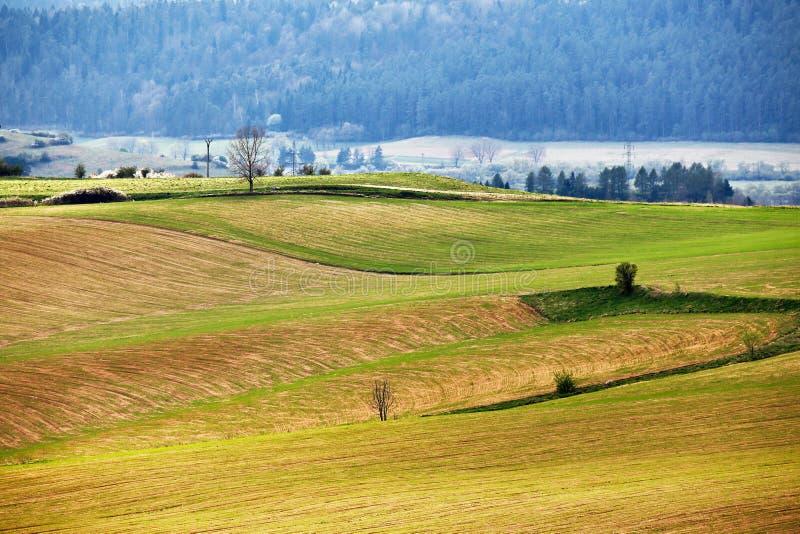 绿色春天小山在斯洛伐克 4月晴朗的乡下 免版税库存图片
