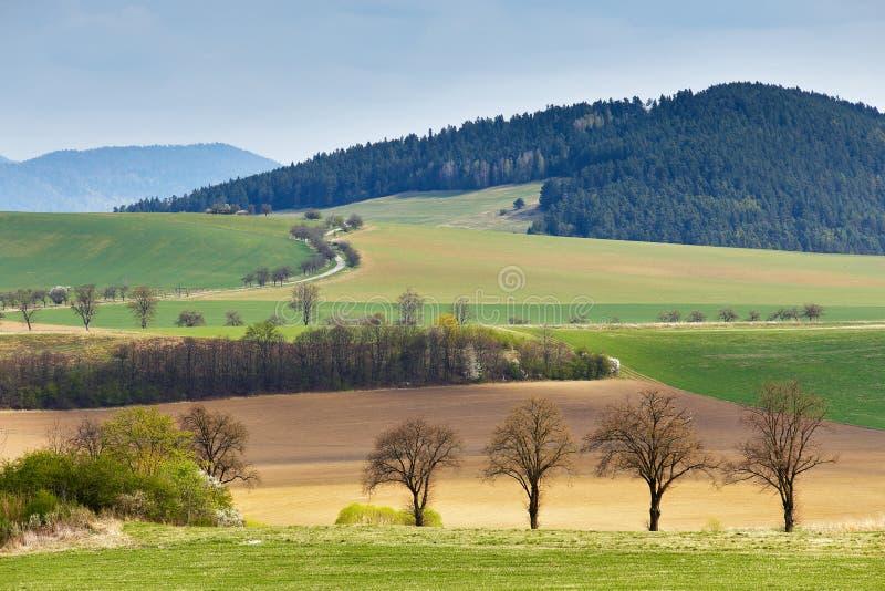绿色春天小山在斯洛伐克 4月晴朗的乡下 库存图片