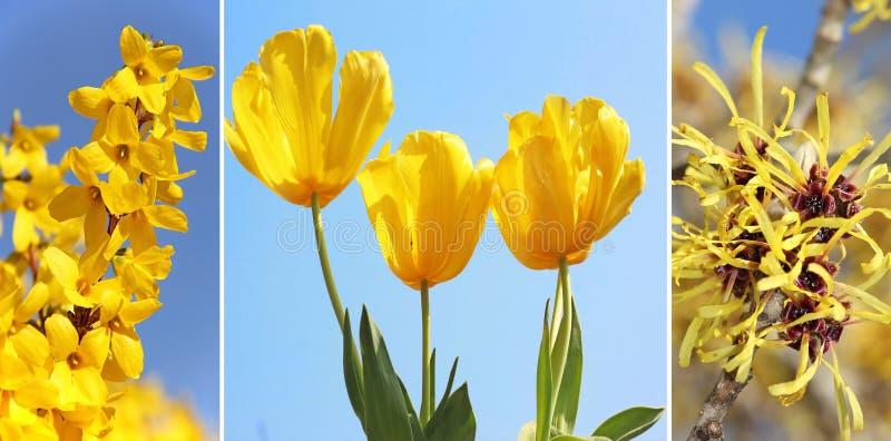 黄色春天花拼贴画  库存图片