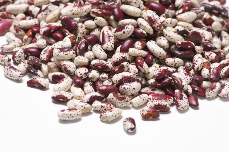 紫色有斑点的扁豆 免版税库存图片