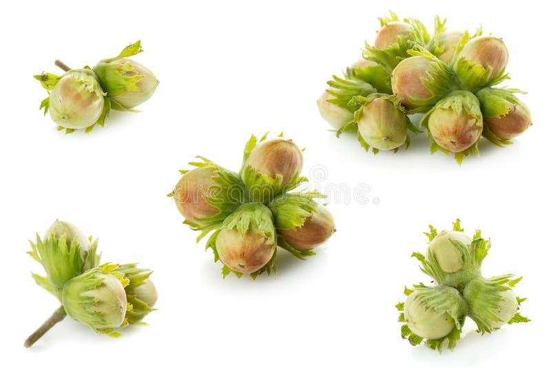 绿色未成熟的榛子 免版税库存图片