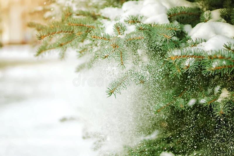 绿色杉树分支细节  库存图片