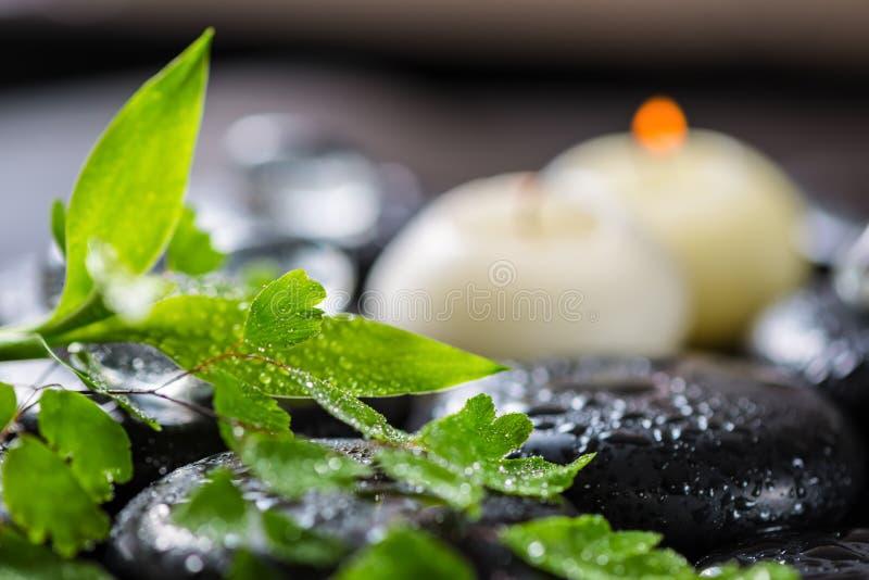 绿色枝杈蕨、竹子、冰和加州美丽的温泉静物画  免版税库存图片