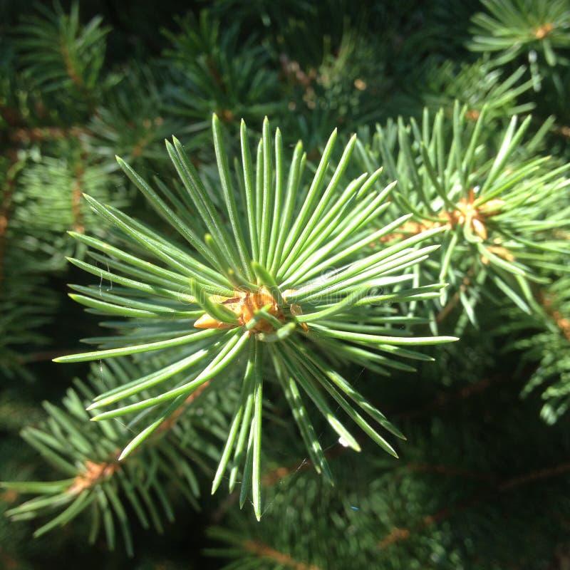绿色树分支  库存照片