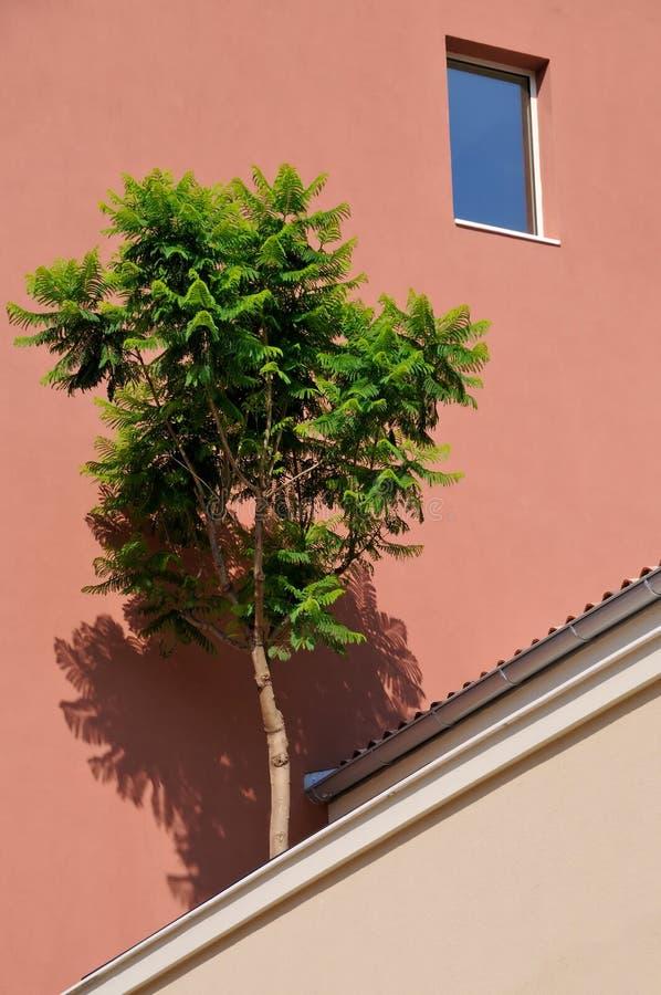 与一棵树的大厦在前景 图库摄影