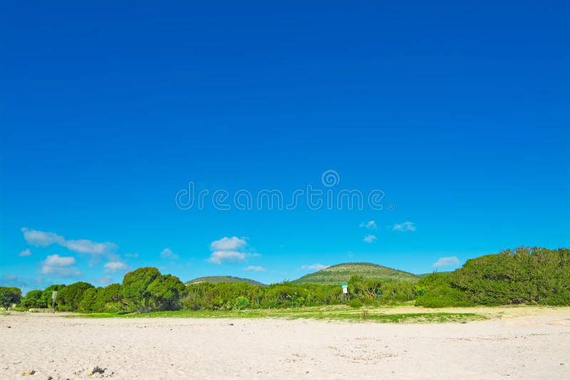 绿色树和沙子在蓝天下 库存照片