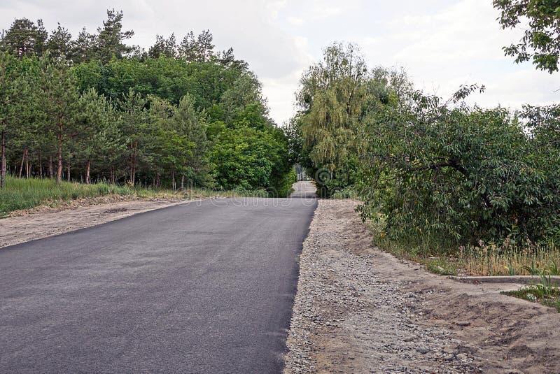绿色树和灌木沿一条空的柏油路 免版税库存照片