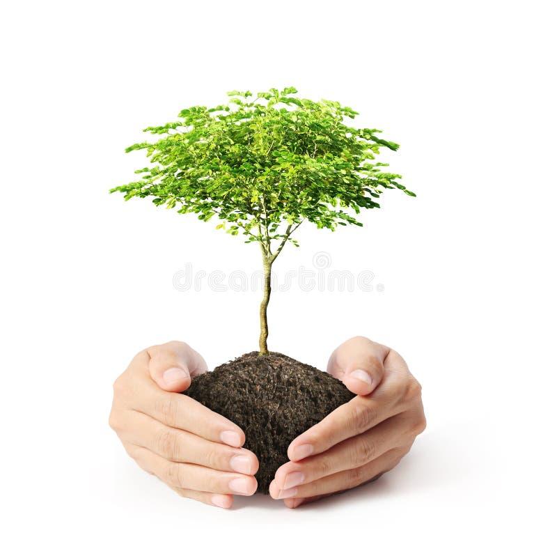 绿色树在手中 免版税库存照片