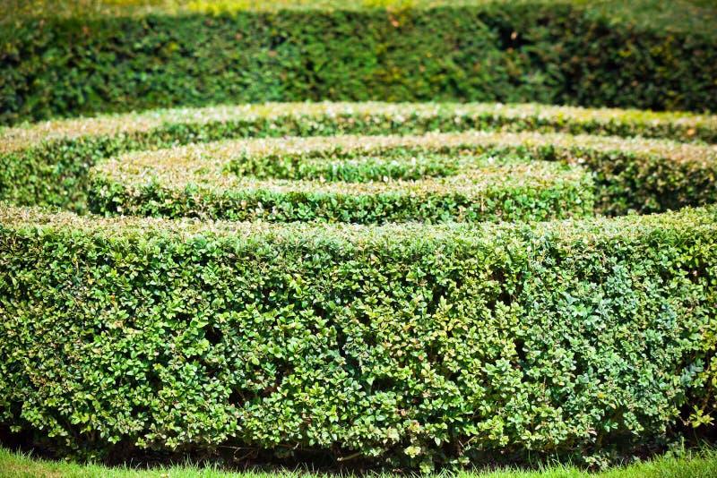 绿色树篱迷宫 免版税库存图片