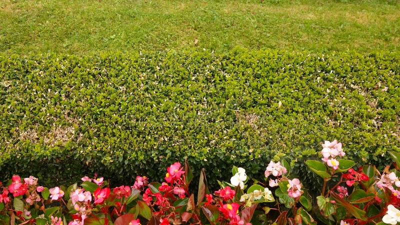 绿色树篱围场篱芭 库存图片