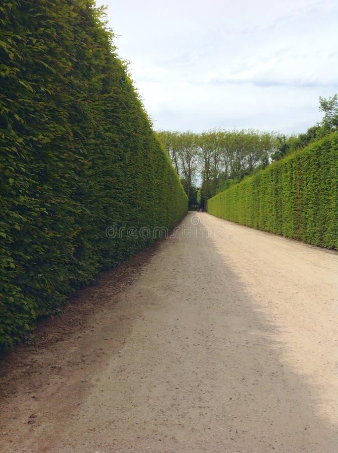 绿色树篱 库存照片