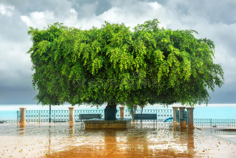 绿色树滑稽的形状在堤防的在西西里岛 免版税图库摄影