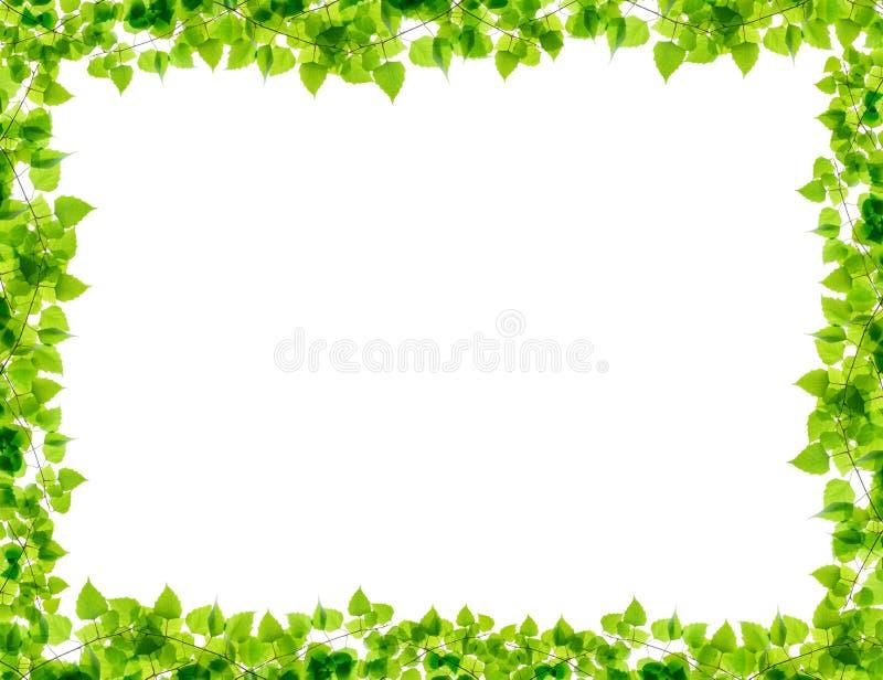 绿色桦树枝杈框架 免版税图库摄影