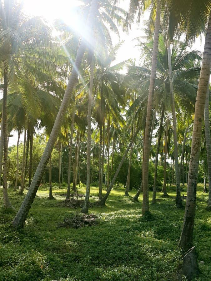 绿色棕榈树丛在阳光下 库存图片