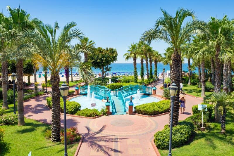 绿色棕榈树和喷泉在海滩附近在阿拉尼亚,土耳其 库存照片