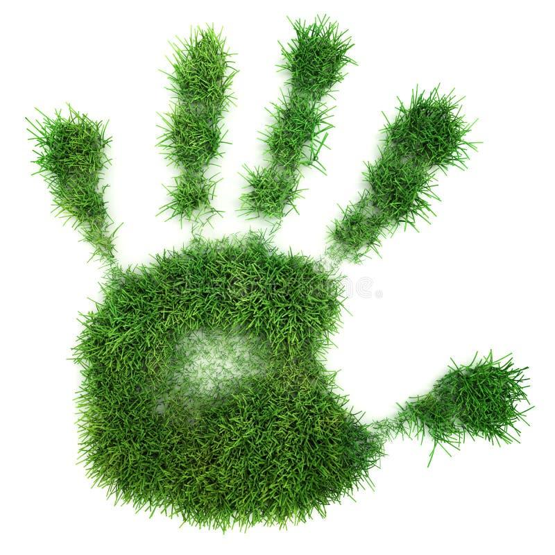 绿色棕榈 库存照片