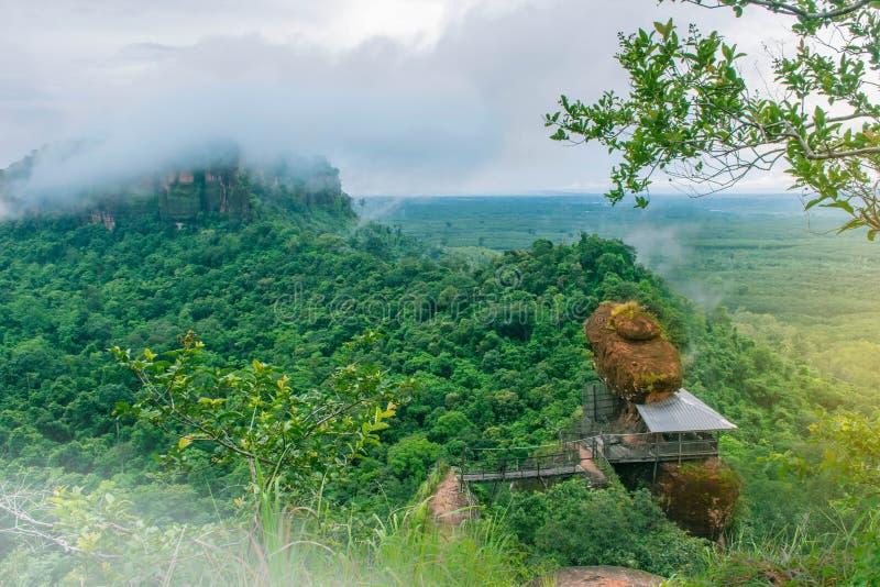 绿色森林、有雾的Forest Hills Phu的Tok,桶盖坎市省泰国,射线光和透镜,火光作用软的焦点  免版税库存照片
