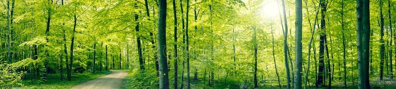 绿色森林全景风景 图库摄影