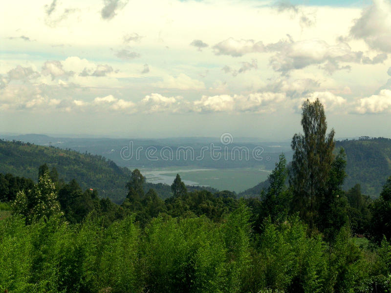 绿色森林和蓝色天际 免版税库存照片