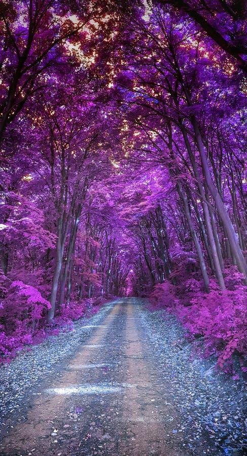 紫色森林 免版税库存图片
