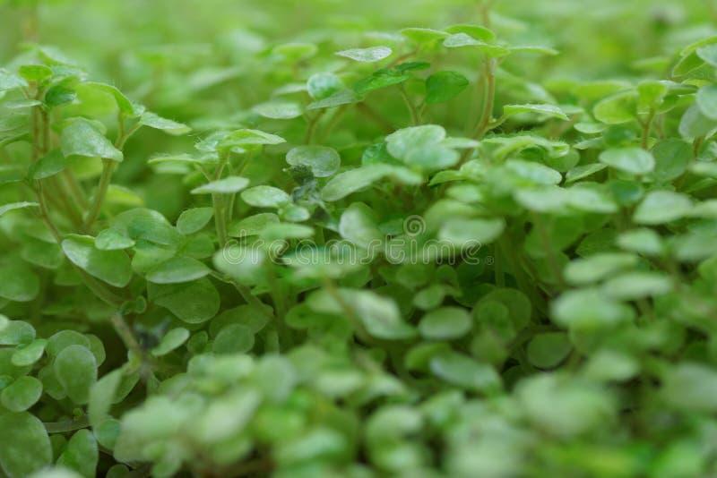 Download 绿色植物。 库存图片. 图片 包括有 本质, 塑料, 庭院, 幼木, brander, 叶茂盛, 生命力 - 30325207