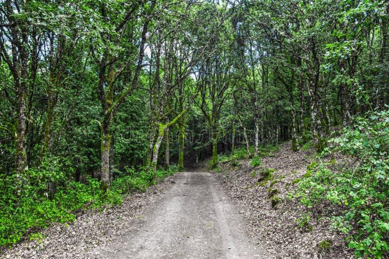 绿色植物和树在土道路附近在森林里 库存图片