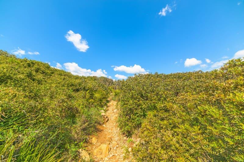绿色植物和蓝天在撒丁岛 图库摄影