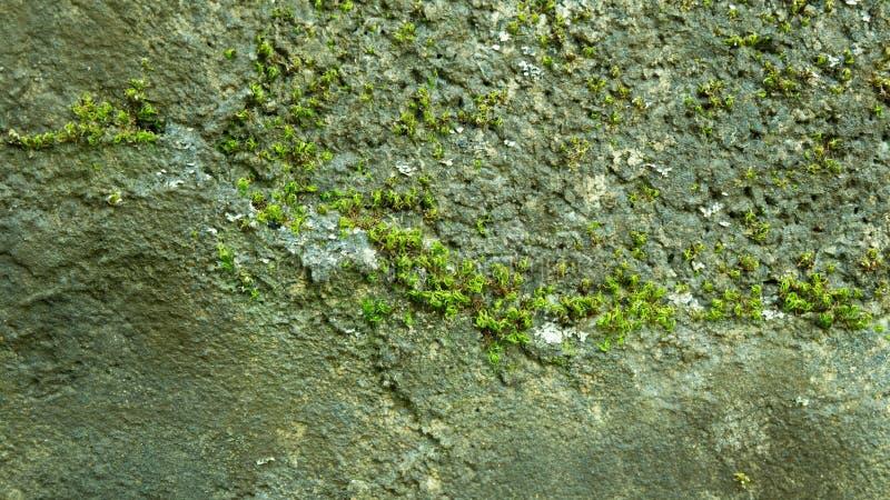绿色植物在森林里 库存图片
