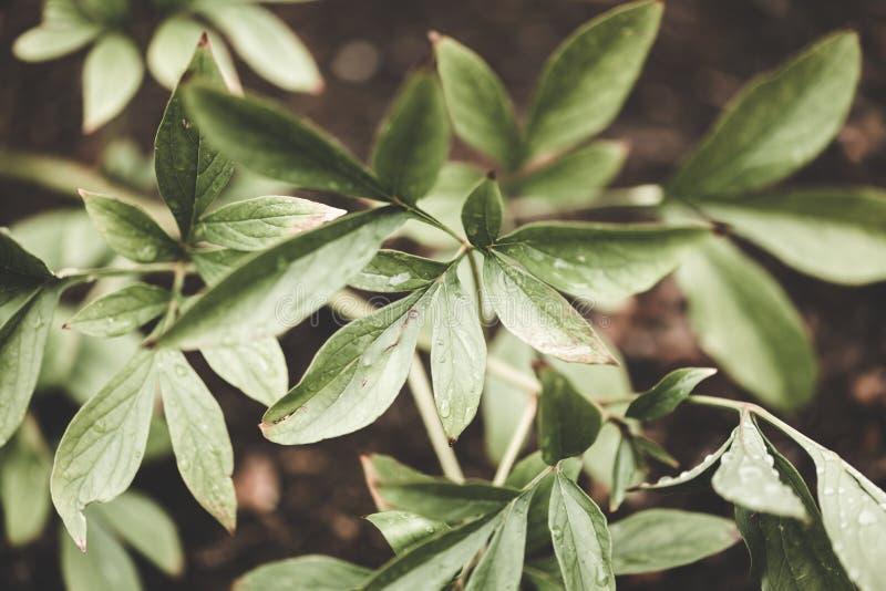 绿色植物在森林,影片编辑 免版税库存照片