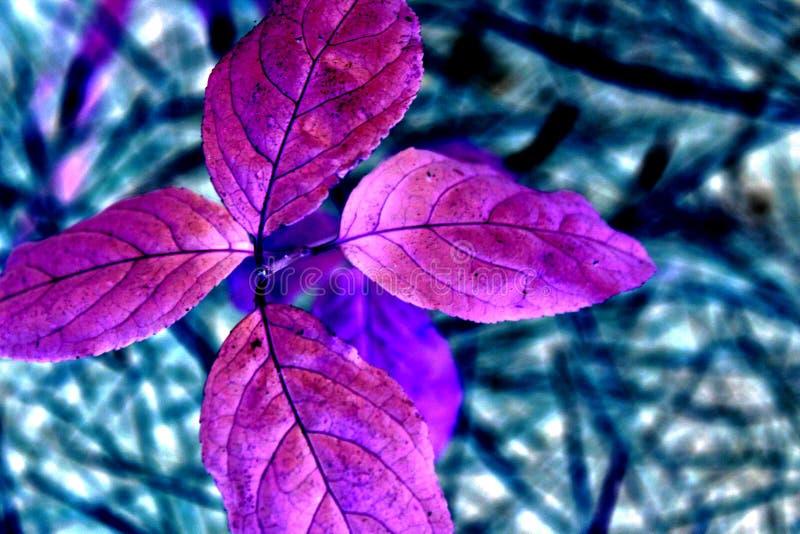 紫色植物 免版税库存照片