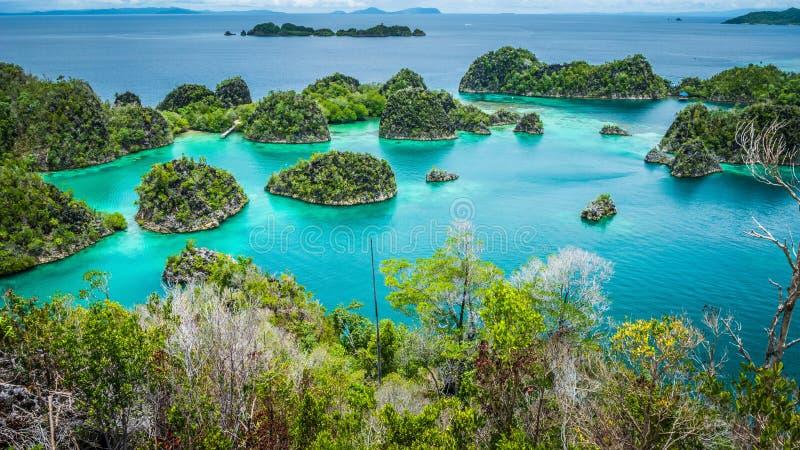 绿色植被包围由天蓝色的清楚的水和包括的Pianemo海岛 王侯Ampat,西部巴布亚,印度尼西亚 库存照片