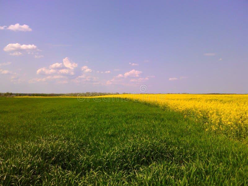 绿色横向黄色 免版税库存图片