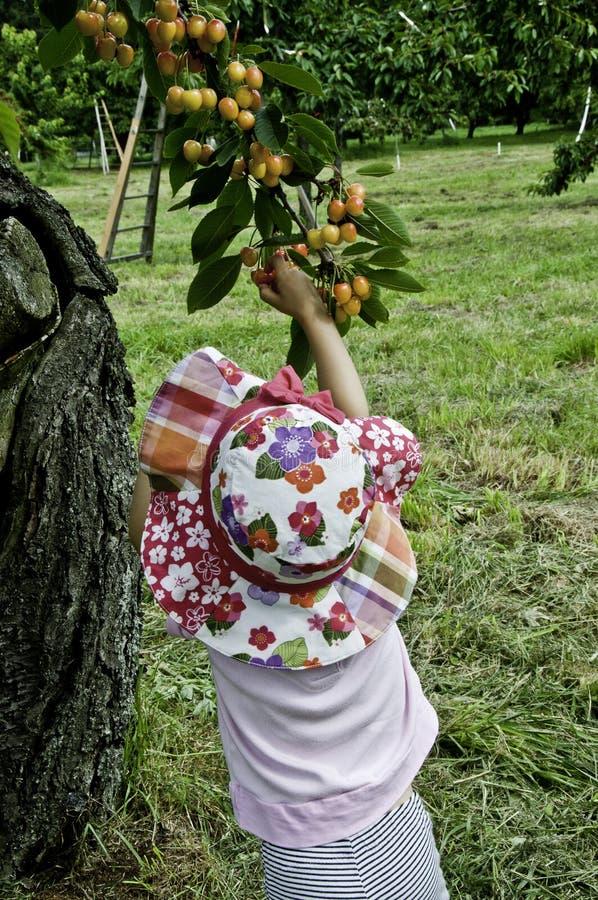 黄色樱桃 免版税库存图片