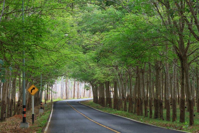 绿色橡胶树在有交通标志的路挖洞 免版税图库摄影
