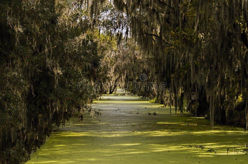 绿色沼泽和青苔 免版税库存照片